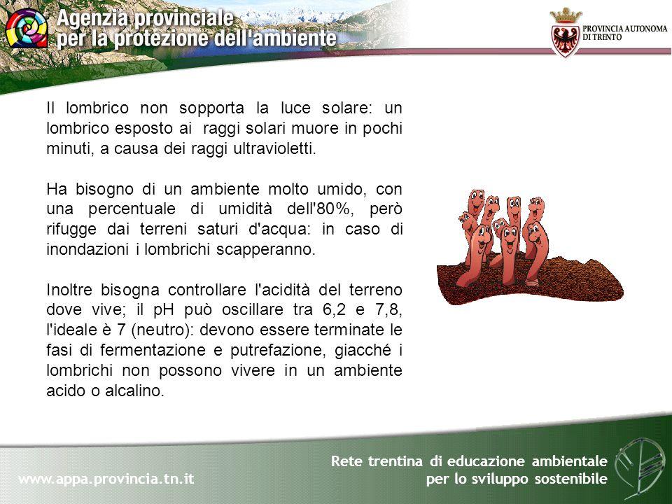Rete trentina di educazione ambientale per lo sviluppo sostenibile www.appa.provincia.tn.it Il lombrico non sopporta la luce solare: un lombrico espos