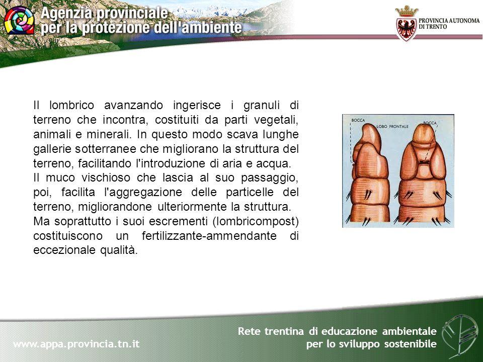 Rete trentina di educazione ambientale per lo sviluppo sostenibile www.appa.provincia.tn.it Il lombrico avanzando ingerisce i granuli di terreno che i