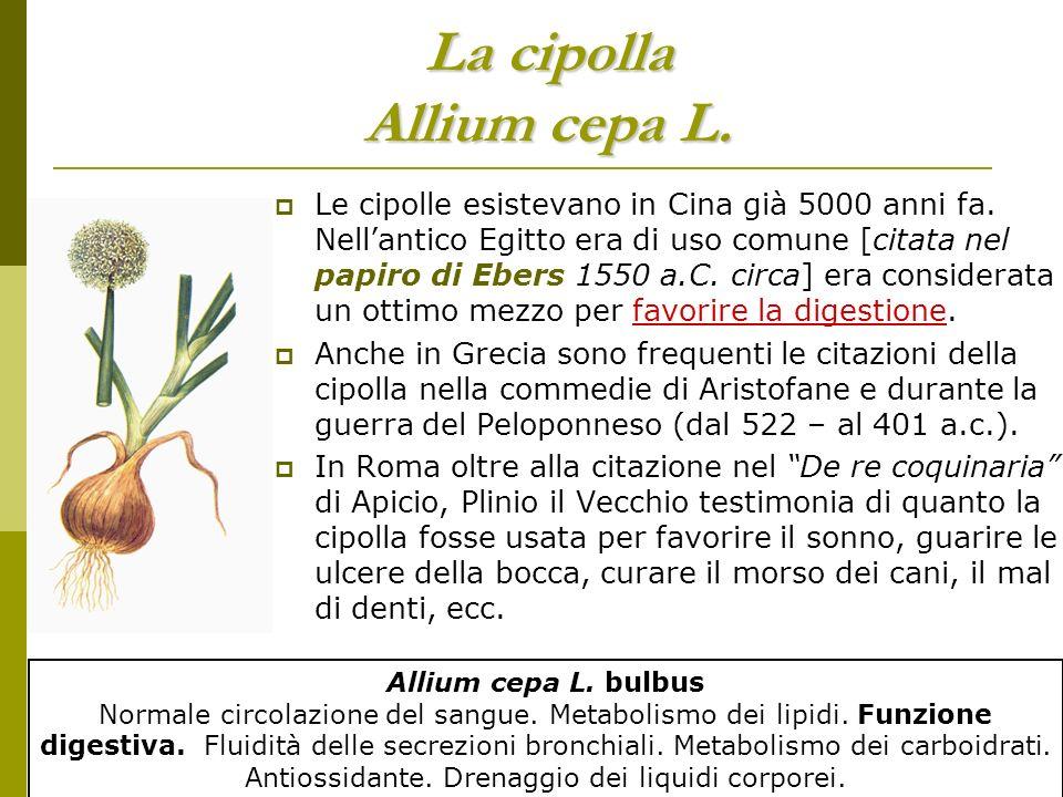 Il Prezzemolo : una pianta interessante usata come prima simbolo sociale e poi come pianta alimentare Il prezzemolo Petrosellinum crispus A.W.HIL.