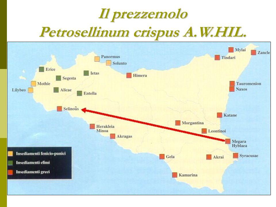 Selinunte – Sicilia Didracma - 540/530-510 aC Si suppone che il nome derivi dalla quantità di prezzemolo selvatico (sélinon) che cresceva sul posto; per la stessa ragione una foglia di prezzemolo fu adottata come simbolo delle loro monete.