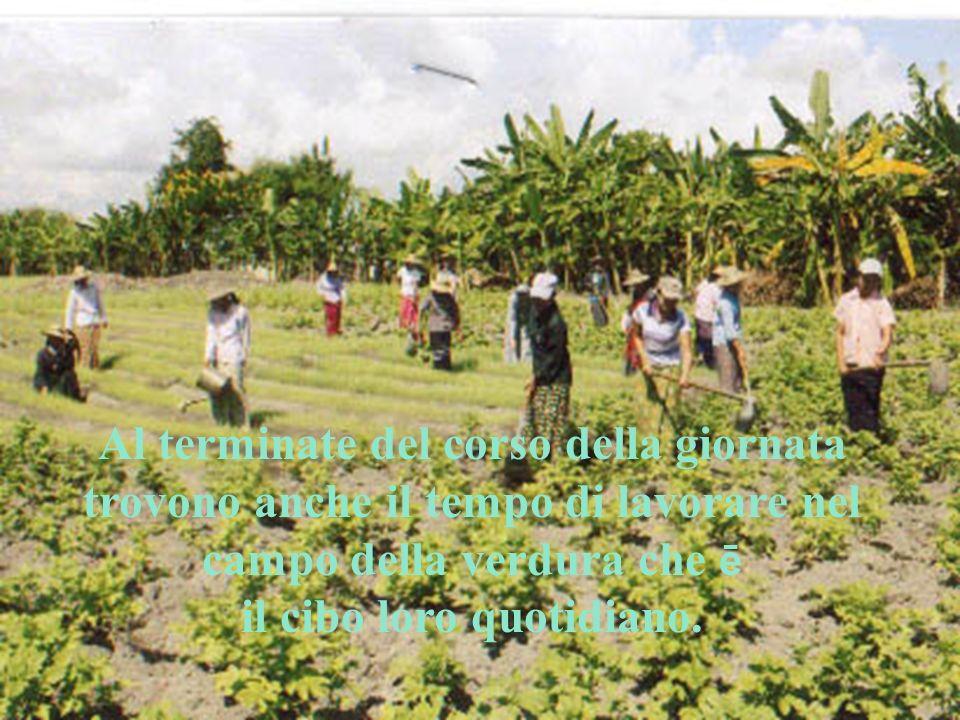 Al terminate del corso della giornata trovono anche il tempo di lavorare nel campo della verdura che ē il cibo loro quotidiano.