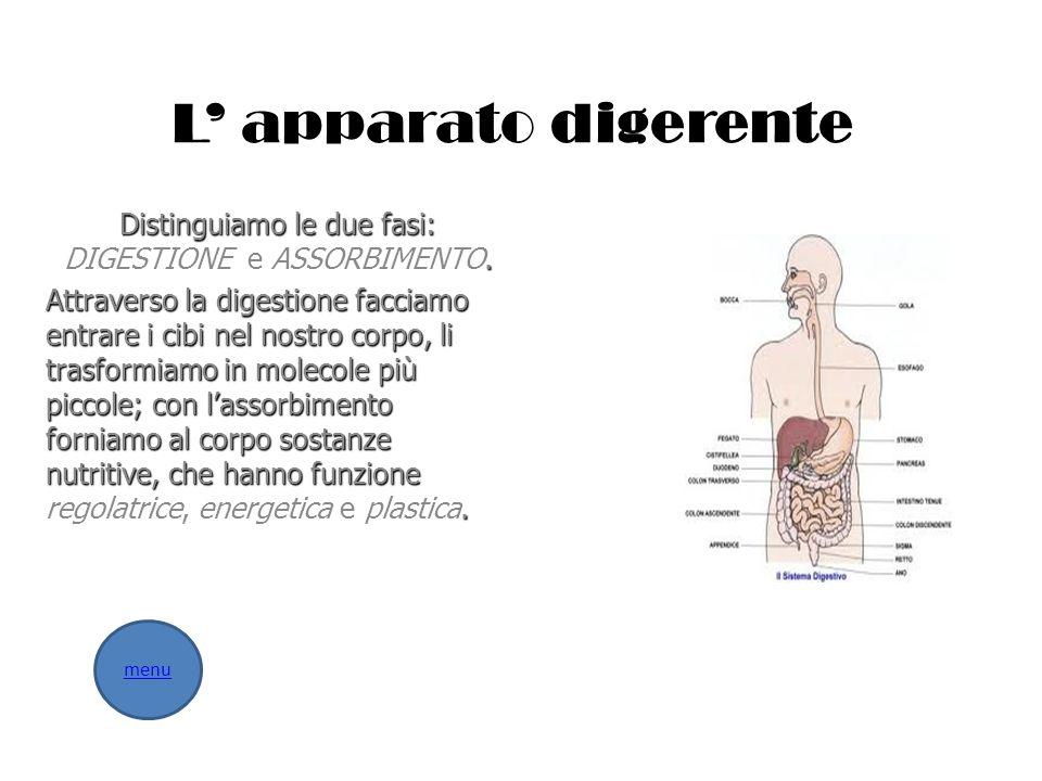 L apparato digerente Distinguiamo le due fasi:. Distinguiamo le due fasi: DIGESTIONE e ASSORBIMENTO. Attraverso la digestione facciamo entrare i cibi