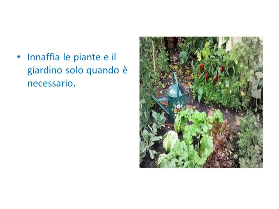 Innaffia le piante e il giardino solo quando è necessario.