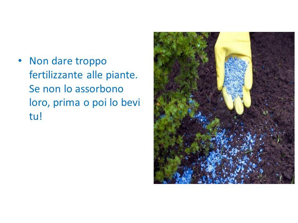 Non dare troppo fertilizzante alle piante. Se non lo assorbono loro, prima o poi lo bevi tu!