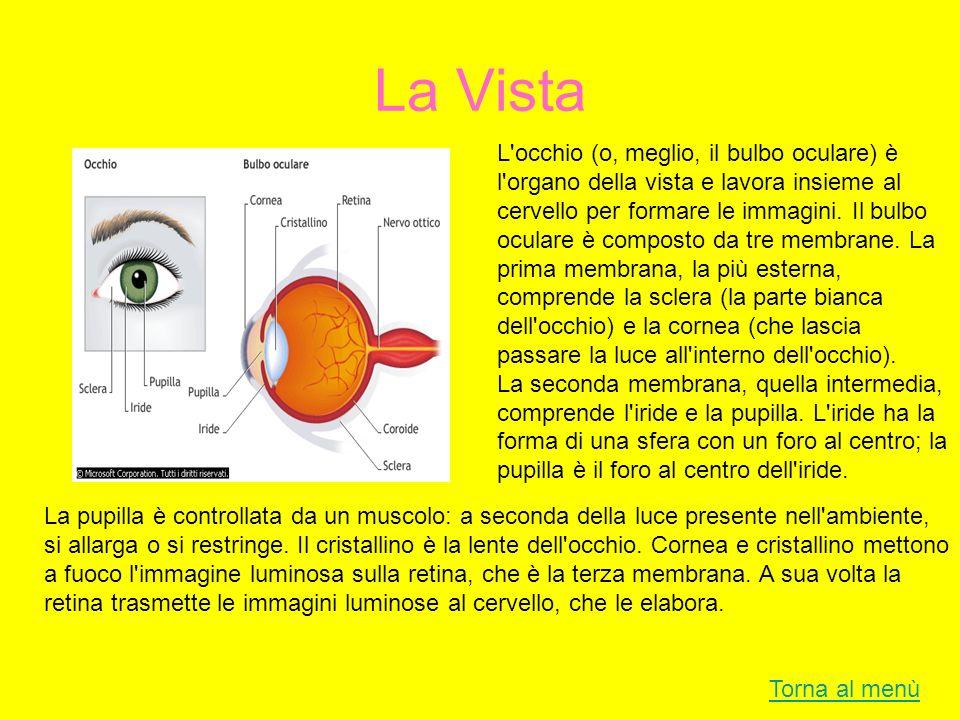 La Vista Torna al menù L'occhio (o, meglio, il bulbo oculare) è l'organo della vista e lavora insieme al cervello per formare le immagini. Il bulbo oc