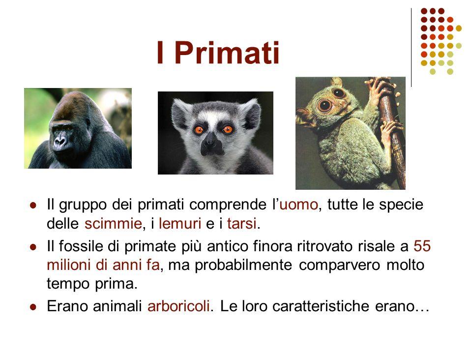 I Primati Il gruppo dei primati comprende luomo, tutte le specie delle scimmie, i lemuri e i tarsi. Il fossile di primate più antico finora ritrovato