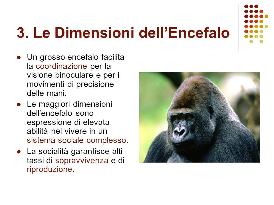 3. Le Dimensioni dellEncefalo Un grosso encefalo facilita la coordinazione per la visione binoculare e per i movimenti di precisione delle mani. Le ma
