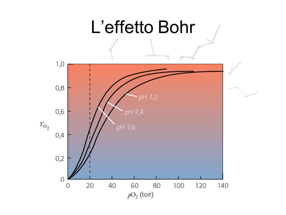 Leffetto Bohr