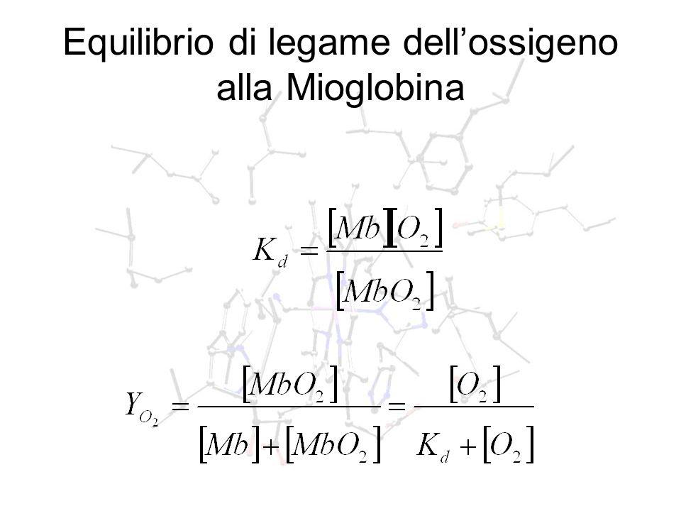 Equilibrio di legame dellossigeno alla Mioglobina