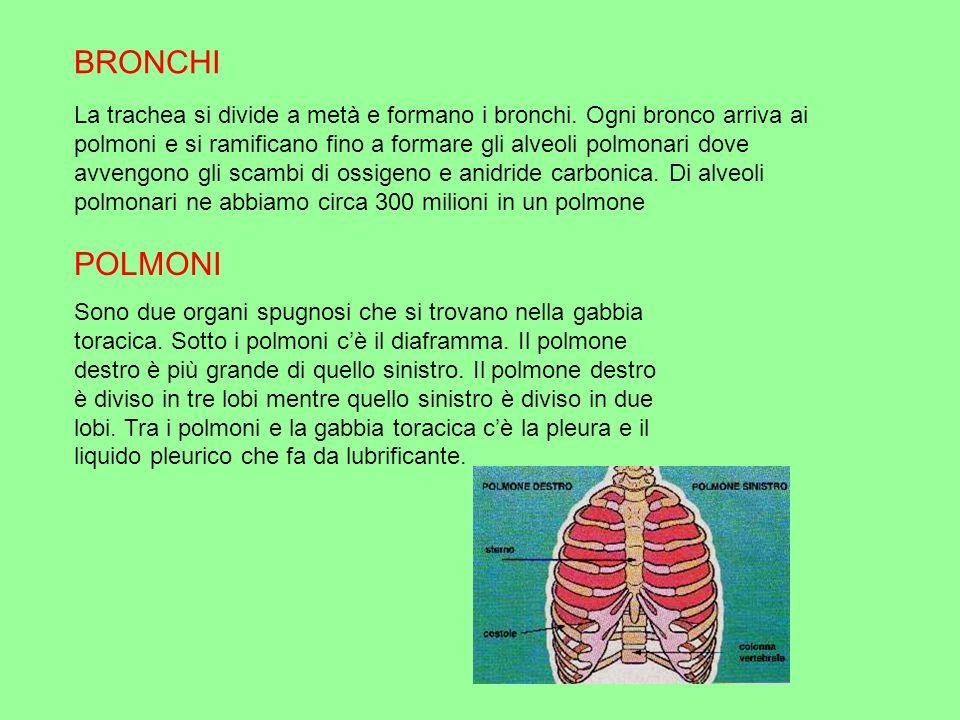 I due tipi di respirazione - La respirazione cellulare : avviene in tutte le cellule precisamente nei mitocondri.