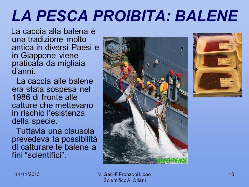 14/11/2013V. Galli-F.Fronzoni Liceo Scientifico A. Oriani 16 LA PESCA PROIBITA: BALENE La caccia alla balena è una tradizione molto antica in diversi