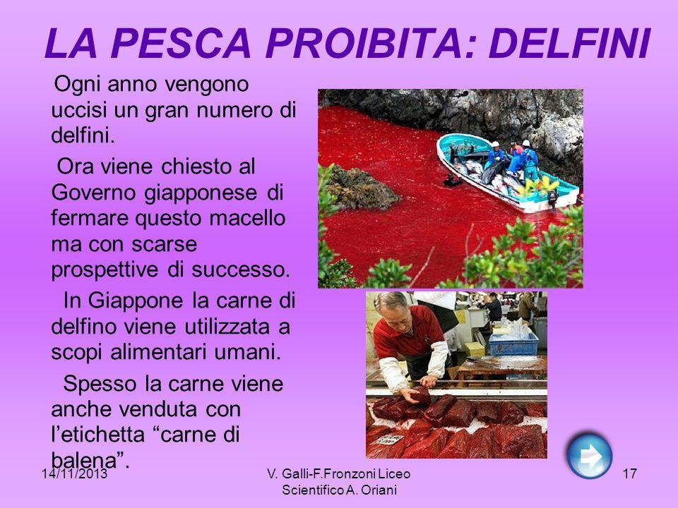 14/11/2013V. Galli-F.Fronzoni Liceo Scientifico A. Oriani 17 LA PESCA PROIBITA: DELFINI Ogni anno vengono uccisi un gran numero di delfini. Ora viene