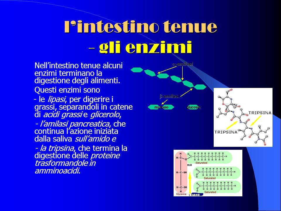 lintestino tenue - gli enzimi Nellintestino tenue alcuni enzimi terminano la digestione degli alimenti.