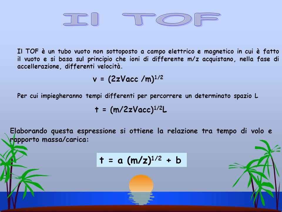 Il TOF è un tubo vuoto non sottoposto a campo elettrico e magnetico in cui è fatto il vuoto e si basa sul principio che ioni di differente m/z acquist