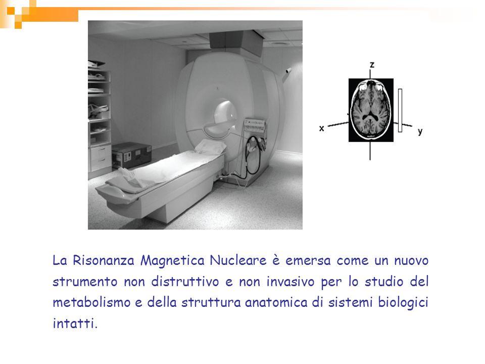 La Risonanza Magnetica Nucleare è emersa come un nuovo strumento non distruttivo e non invasivo per lo studio del metabolismo e della struttura anatom