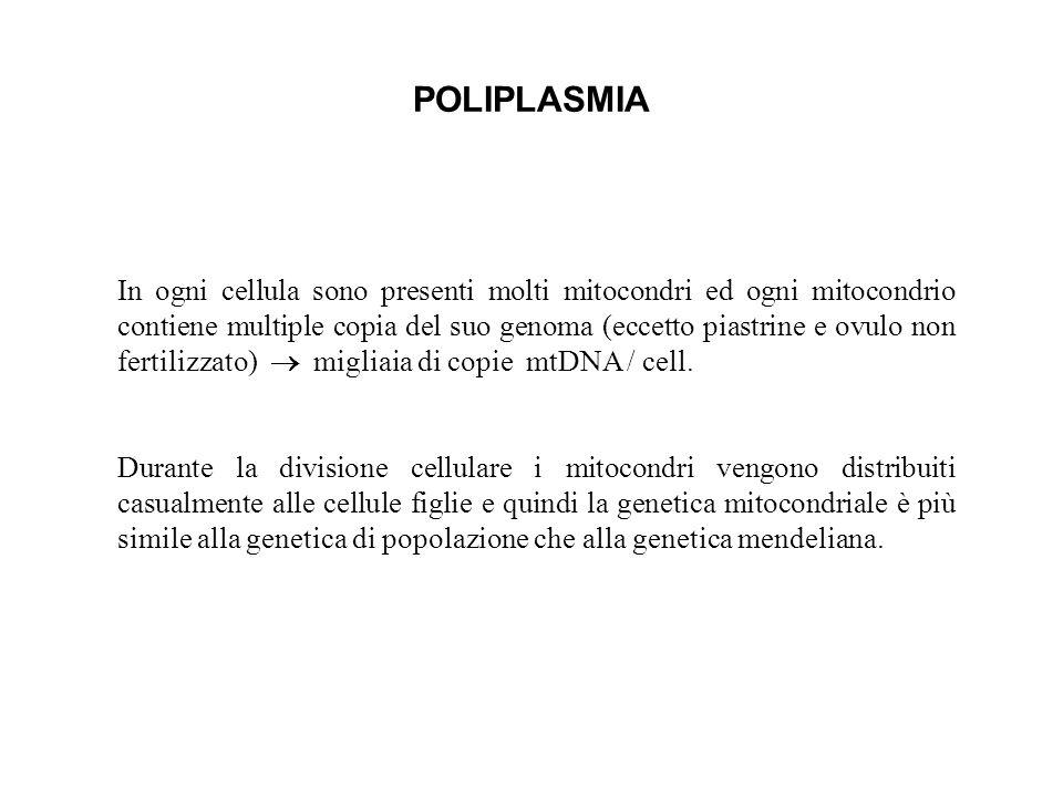 POLIPLASMIA In ogni cellula sono presenti molti mitocondri ed ogni mitocondrio contiene multiple copia del suo genoma (eccetto piastrine e ovulo non f