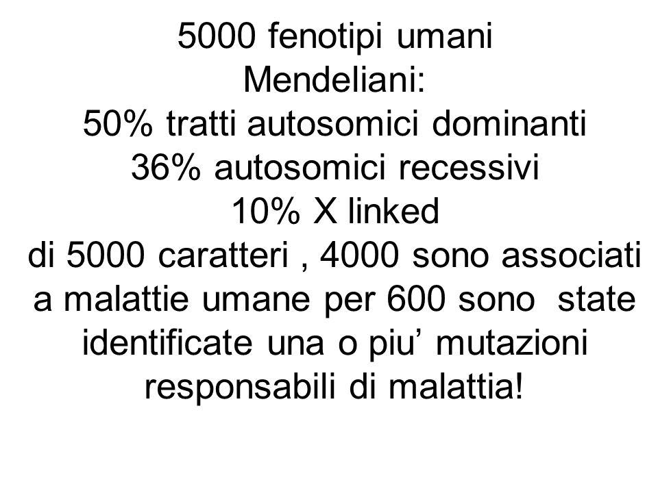 Mitocondrio…. mtDNA 16569 coppie di basi e possiede 37 geni