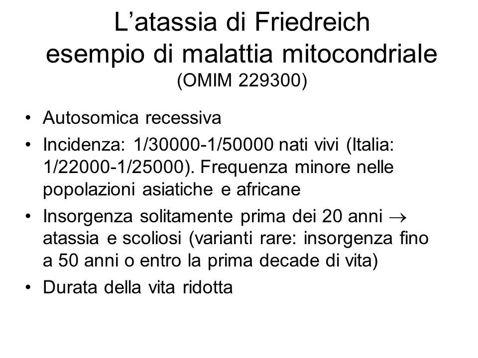 Latassia di Friedreich esempio di malattia mitocondriale (OMIM 229300) Autosomica recessiva Incidenza: 1/30000-1/50000 nati vivi (Italia: 1/22000-1/25