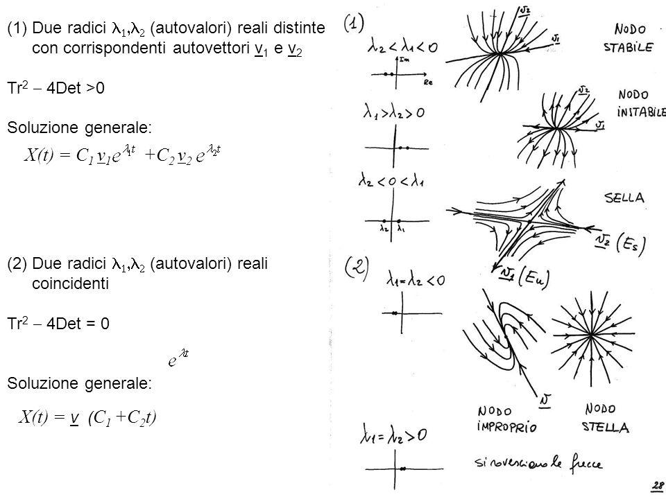 (1)Due radici (autovalori) reali distinte con corrispondenti autovettori v 1 e v 2 Tr 2 4Det >0 Soluzione generale: X(t) = C 1 v 1 +C 2 v 2 (2) Due ra