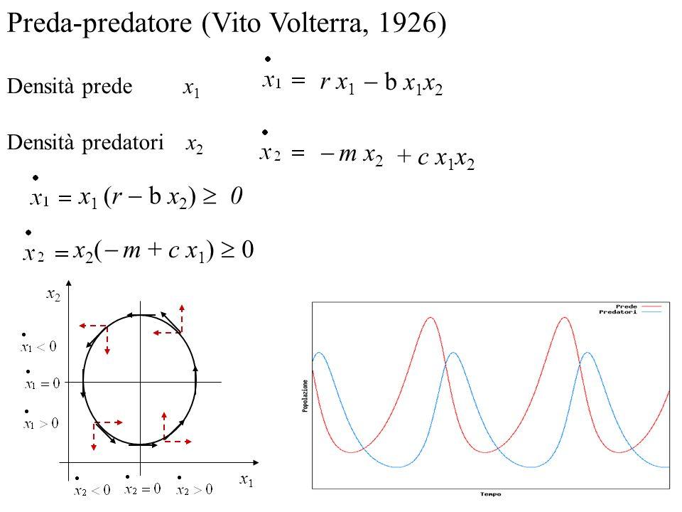 Preda-predatore (Vito Volterra, 1926) Densità prede x 1 Densità predatori x 2 r x 1 m x 2 + c x 1 x 2 b x 1 x 2 x1x1 x2x2 x 1 (r b x 2 ) 0 x 2 ( m + c