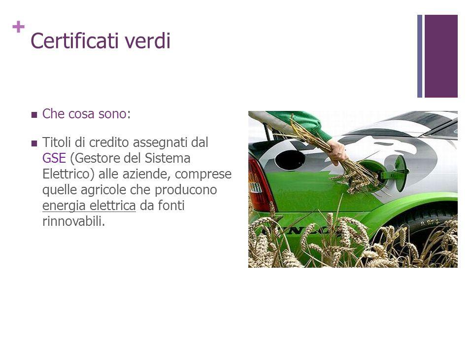 + Certificati verdi Che cosa sono: Titoli di credito assegnati dal GSE (Gestore del Sistema Elettrico) alle aziende, comprese quelle agricole che prod