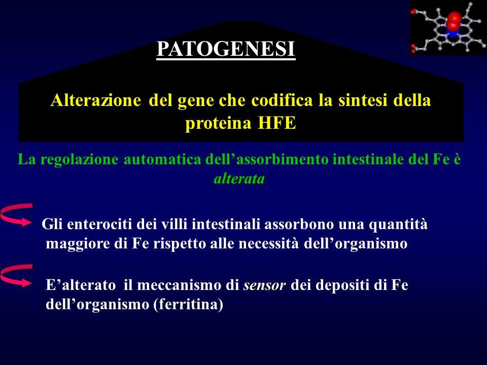 Alterazione del gene che codifica la sintesi della proteina HFE Gli enterociti dei villi intestinali assorbono una quantità maggiore di Fe rispetto al