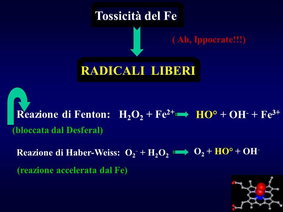 Tossicità del Fe RADICALI LIBERI Reazione di Fenton: H 2 O 2 + Fe 2+ HO° + OH - + Fe 3+ Reazione di Haber-Weiss: O 2 - + H 2 O 2 O 2 + HO° + OH - (rea