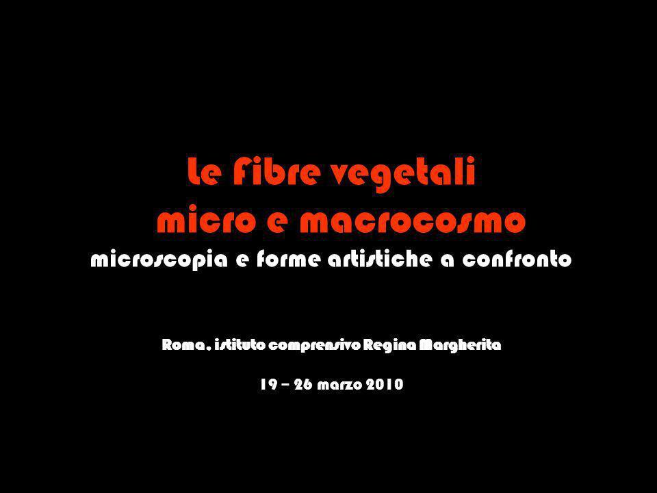 Le Fibre vegetali micro e macrocosmo microscopia e forme artistiche a confronto Roma, istituto comprensivo Regina Margherita 19 – 26 marzo 2010