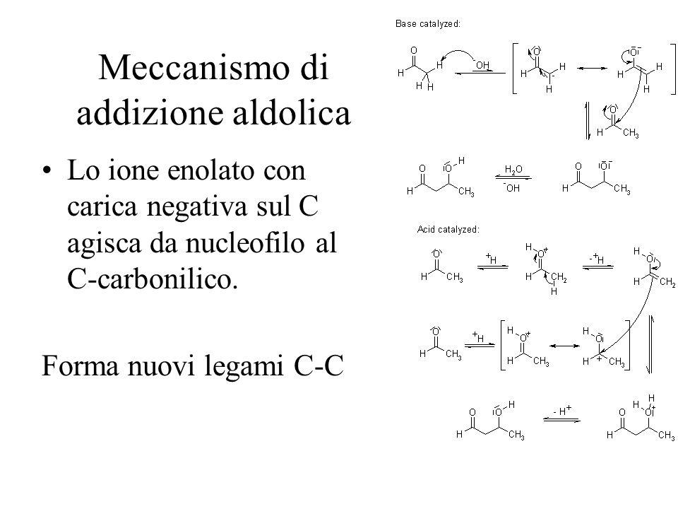 Meccanismo di addizione aldolica Lo ione enolato con carica negativa sul C agisca da nucleofilo al C-carbonilico. Forma nuovi legami C-C