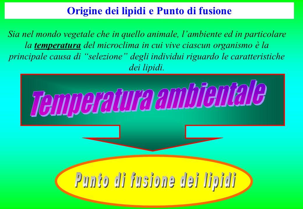 Origine dei lipidi e Punto di fusione Sia nel mondo vegetale che in quello animale, lambiente ed in particolare la temperatura del microclima in cui v