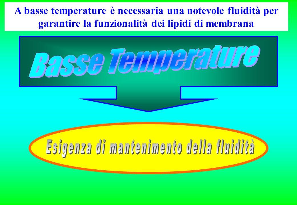A basse temperature è necessaria una notevole fluidità per garantire la funzionalità dei lipidi di membrana