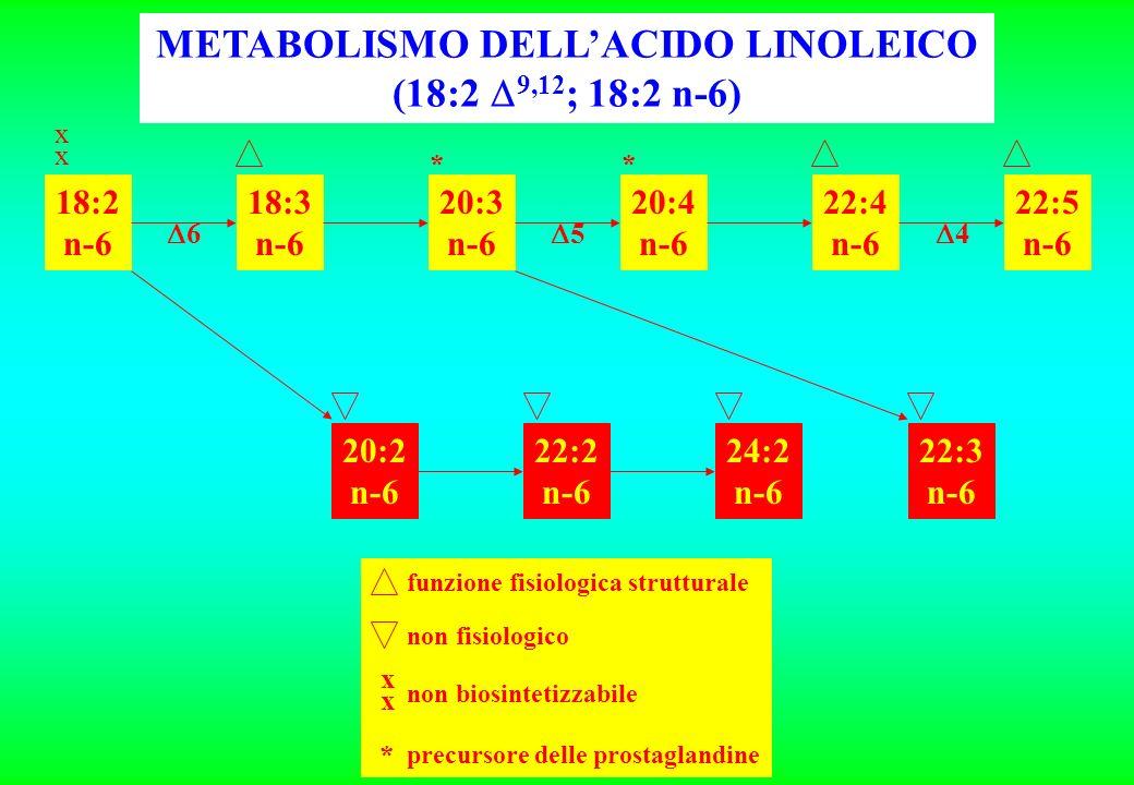18:2 n-6 18:3 n-6 20:3 n-6 20:4 n-6 22:4 n-6 22:5 n-6 20:2 n-6 22:2 n-6 24:2 n-6 22:3 n-6 xxxx 6 4 5 ** funzione fisiologica strutturale non fisiologico xxxx non biosintetizzabile * precursore delle prostaglandine METABOLISMO DELLACIDO LINOLEICO (18:2 9,12 ; 18:2 n-6)