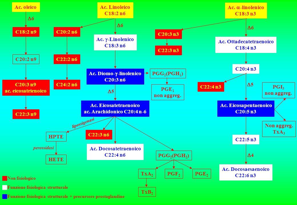 Ac. oleico C18:2 n9 C20:2 n9 C20:3 n9 ac. eicosatrienoico C22:3 n9 C20:2 n6 C22:2 n6 C24:2 n6 Ac. Linoleico C18:2 n6 Ac. -Linolenico C18:3 n6 Ac. Diom