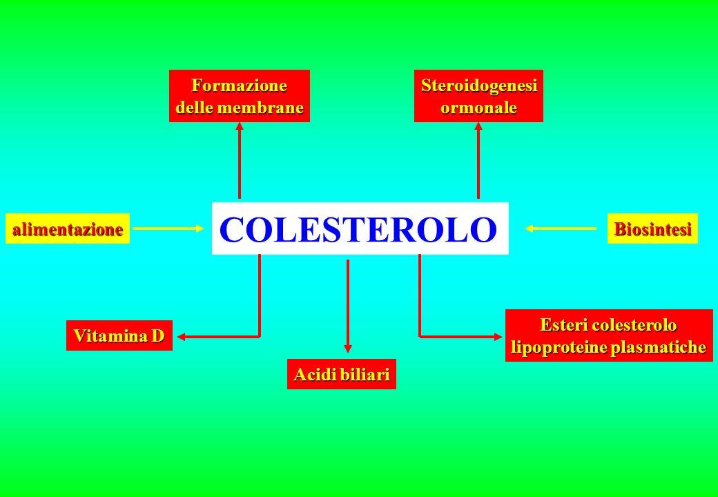 COLESTEROLO Formazione delle membrane alimentazione Vitamina D Acidi biliari Esteri colesterolo lipoproteine plasmatiche Biosintesi Steroidogenesiormonale
