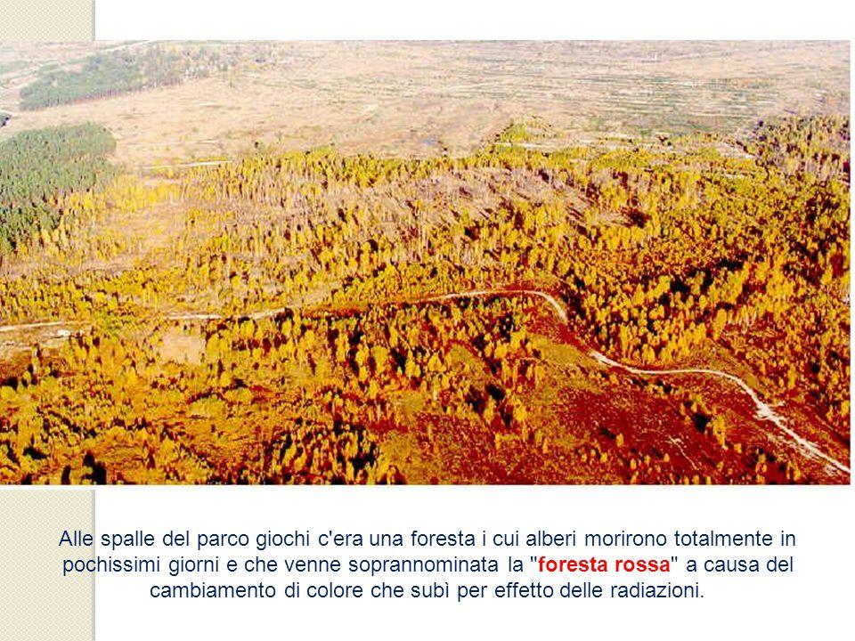 Alle spalle del parco giochi c'era una foresta i cui alberi morirono totalmente in pochissimi giorni e che venne soprannominata la