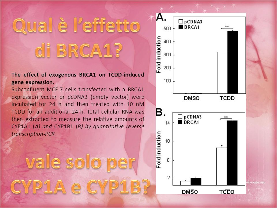 The effect of exogenous BRCA1 on TCDD-induced gene expression.