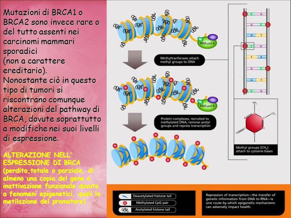Mutazioni di BRCA1 o BRCA2 sono invece rare o del tutto assenti nei carcinomi mammari sporadici (non a carattere ereditario). Nonostante ciò in questo