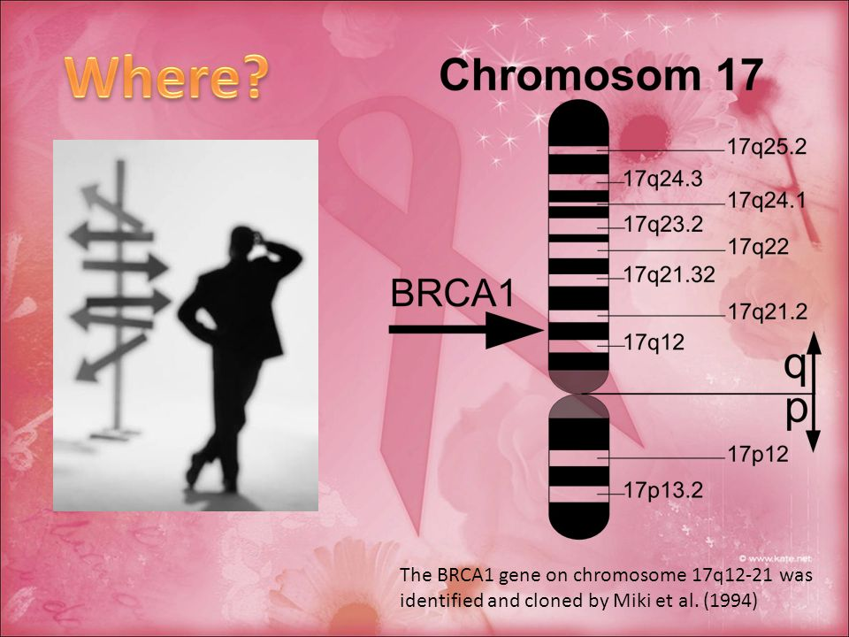 The BRCA1 gene on chromosome 17q12-21 was identified and cloned by Miki et al. (1994)