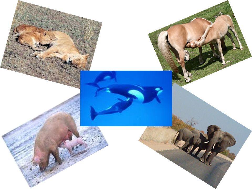 infattiNoi non abbiamo due cuori - uno per gli animali, l altro per gli umani. Alphone de Lamartine