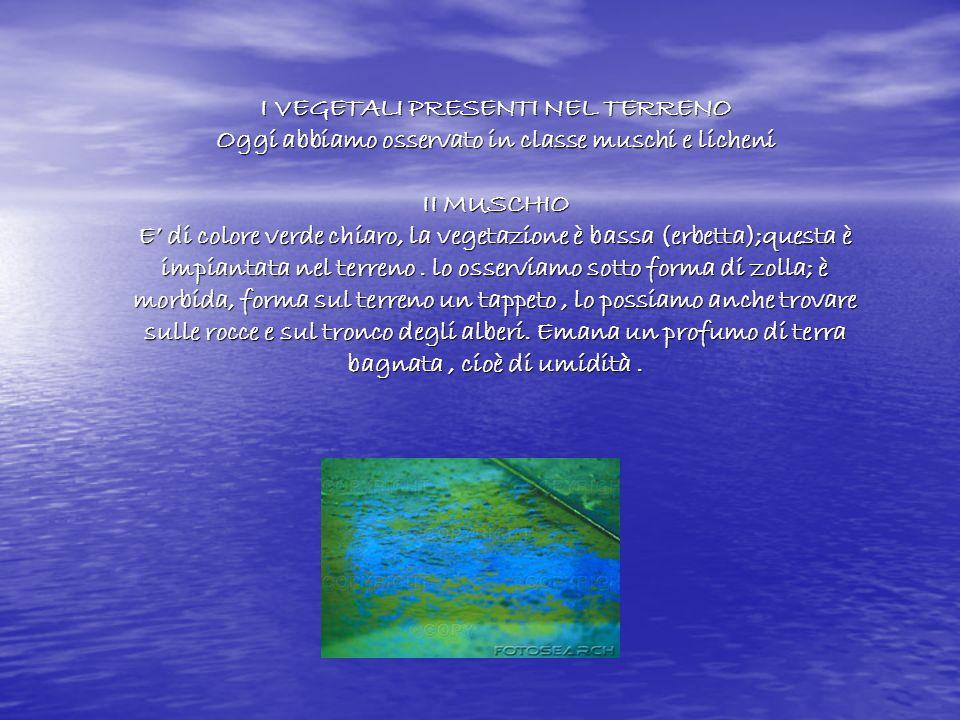 I VEGETALI PRESENTI NEL TERRENO Oggi abbiamo osservato in classe muschi e licheni II MUSCHIO E di colore verde chiaro, la vegetazione è bassa (erbetta