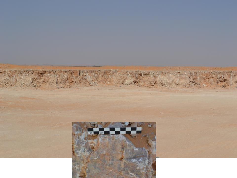 Frammento di ceramica con stambecco dipinto.El-Obeid.