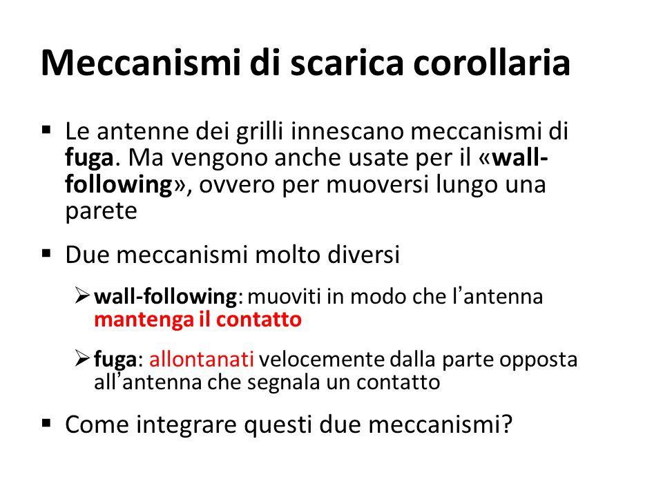 Meccanismi di scarica corollaria Le antenne dei grilli innescano meccanismi di fuga. Ma vengono anche usate per il «wall- following», ovvero per muove