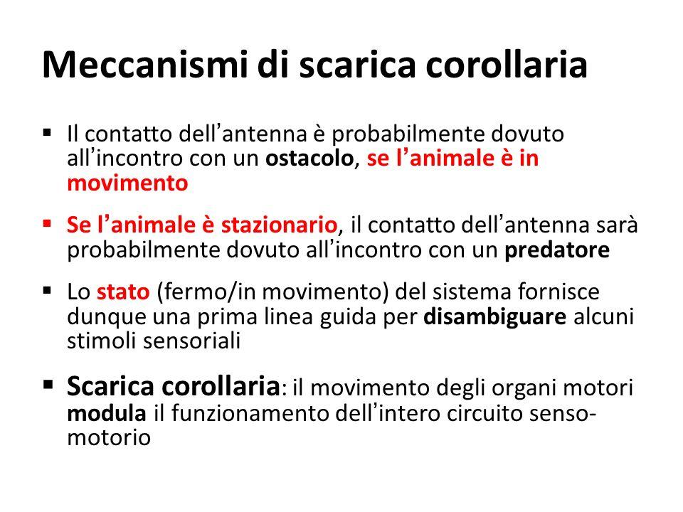 Meccanismi di scarica corollaria Il contatto dellantenna è probabilmente dovuto allincontro con un ostacolo, se lanimale è in movimento Se lanimale è