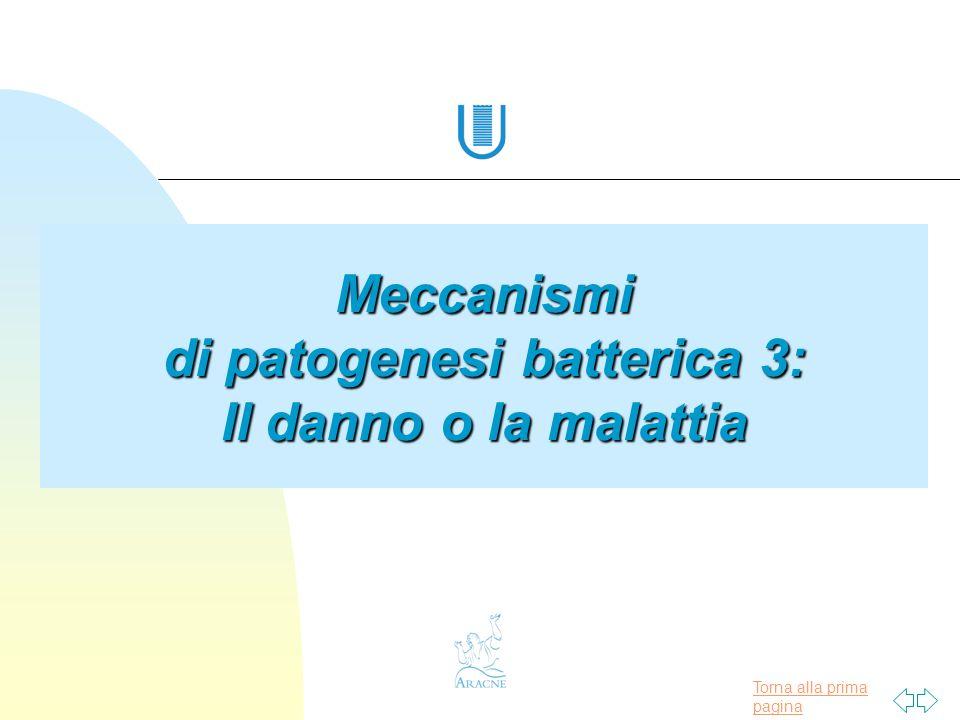 Torna alla prima pagina Meccanismi di patogenesi batterica 3: Il danno o la malattia