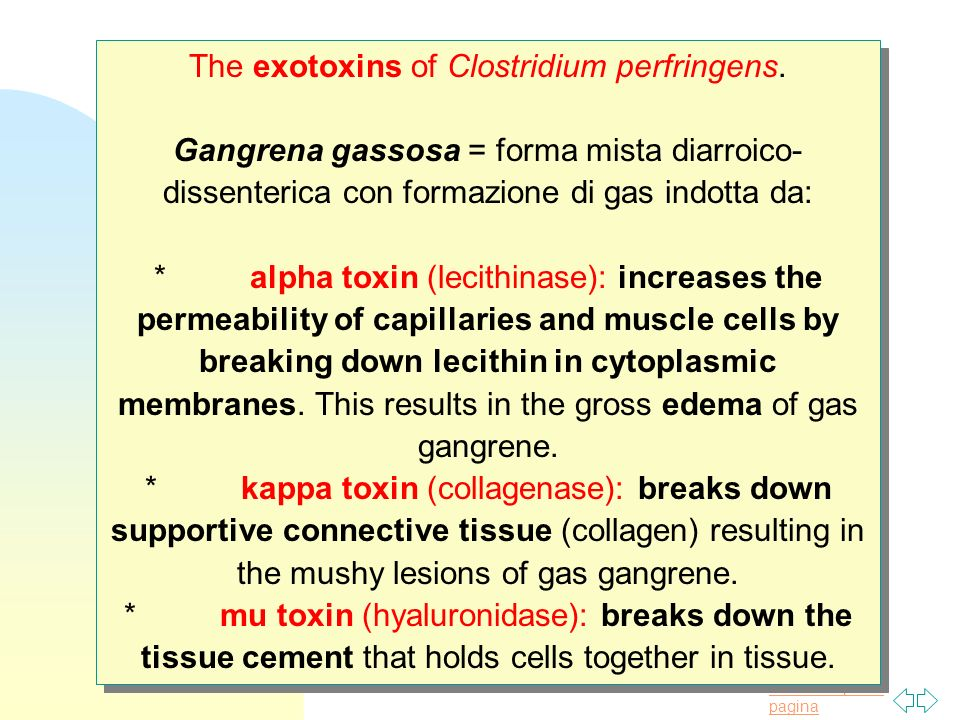Torna alla prima pagina The exotoxins of Clostridium perfringens.