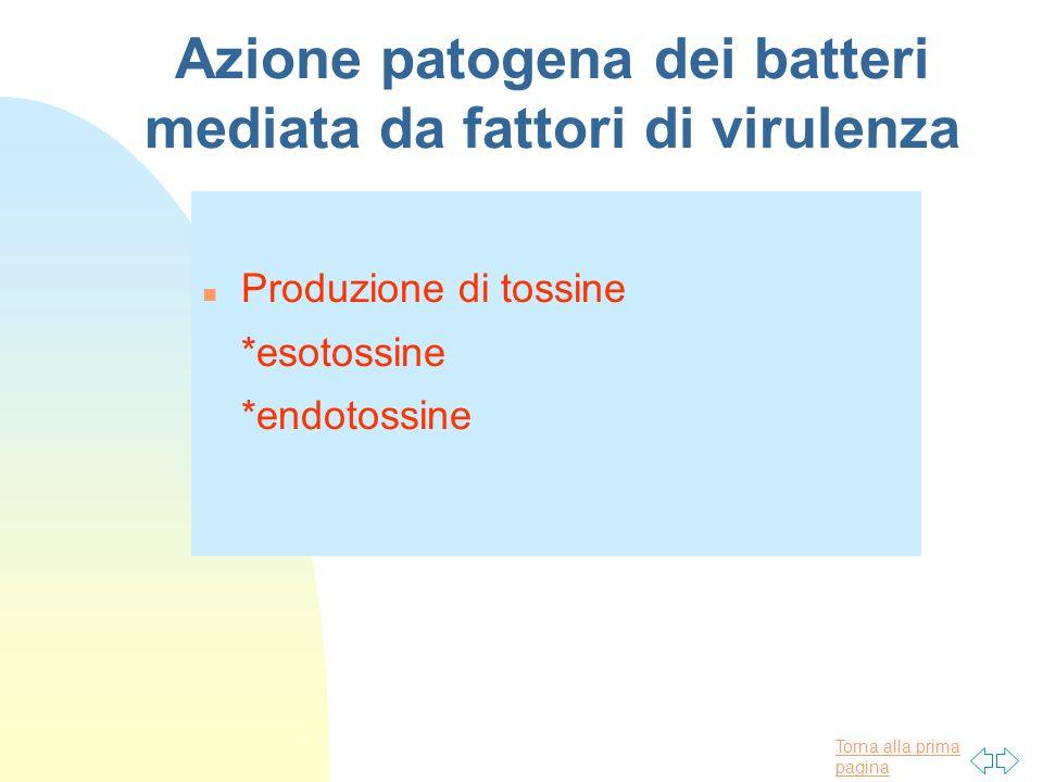 Torna alla prima pagina Azione patogena dei batteri mediata da fattori di virulenza n Produzione di tossine *esotossine *endotossine