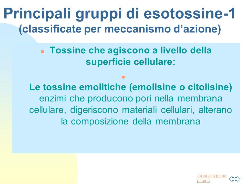 Torna alla prima pagina Principali gruppi di esotossine-1 (classificate per meccanismo dazione) n Tossine che agiscono a livello della superficie cell