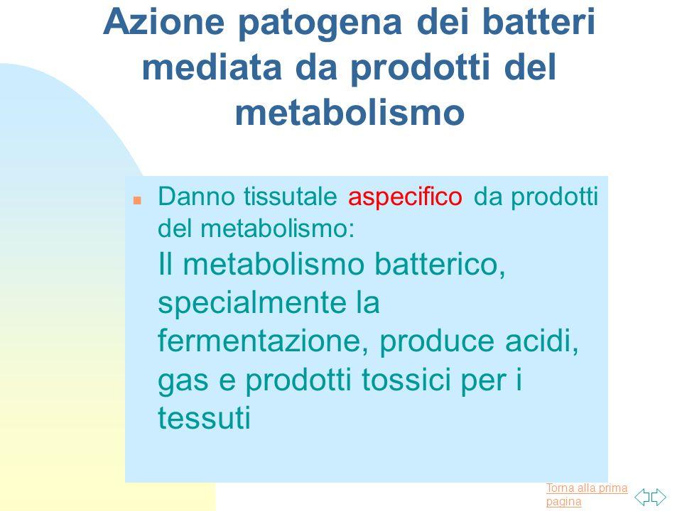 Torna alla prima pagina Azione patogena dei batteri mediata da prodotti del metabolismo n Danno tissutale aspecifico da prodotti del metabolismo: Il m