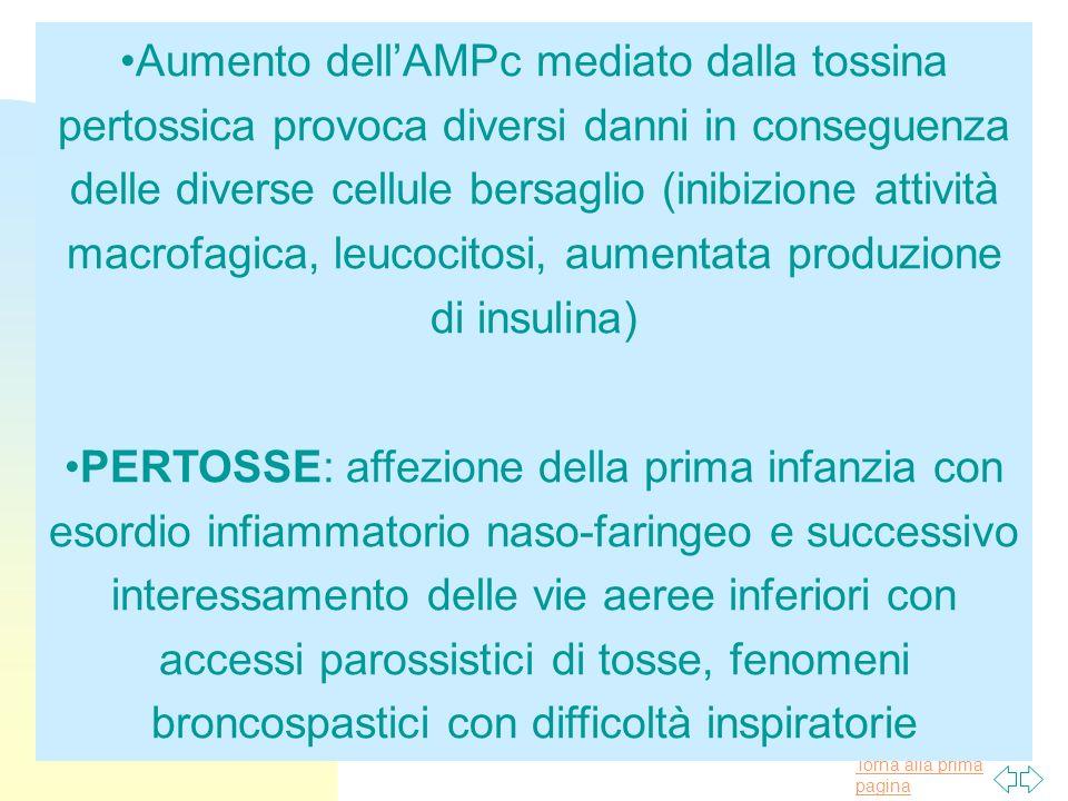 Torna alla prima pagina Aumento dellAMPc mediato dalla tossina pertossica provoca diversi danni in conseguenza delle diverse cellule bersaglio (inibiz