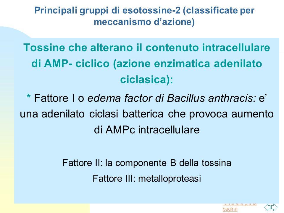 Torna alla prima pagina Principali gruppi di esotossine-2 (classificate per meccanismo dazione) Tossine che alterano il contenuto intracellulare di AM